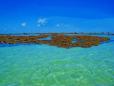 Corais e o vasto azul do mar de Porto de Galinhas.