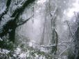 Floresta Ardente