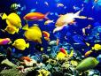 As mais variadas espécies de peixes.