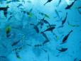 Escola de Peixes em Bora Bora.